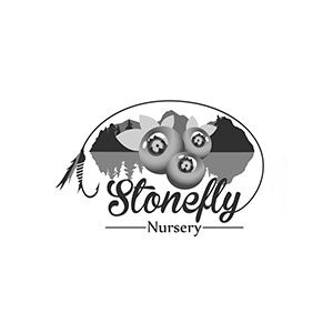 cliente-stonefly